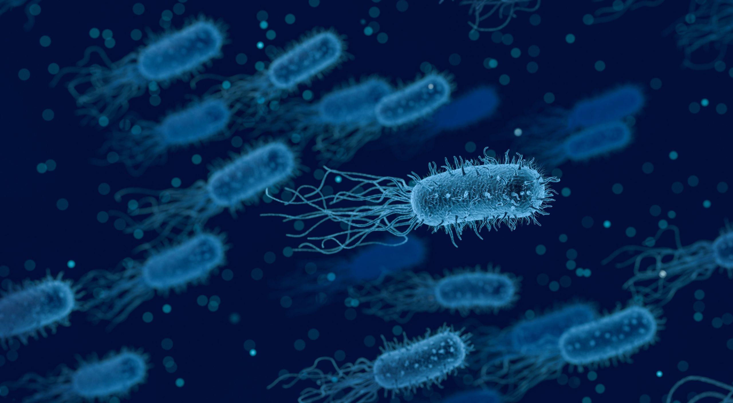 bacteria, medical, biology