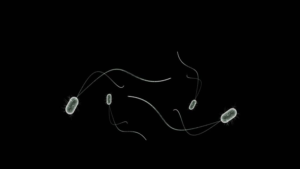 bacteria, microbes, bio